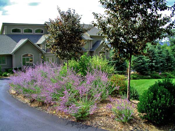 front driveway plantings
