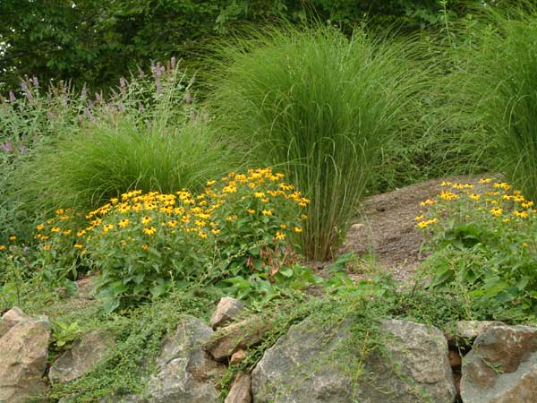 Plantings above a boulder wall.