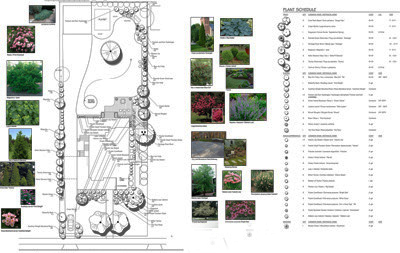 landscape drawing with plant photos