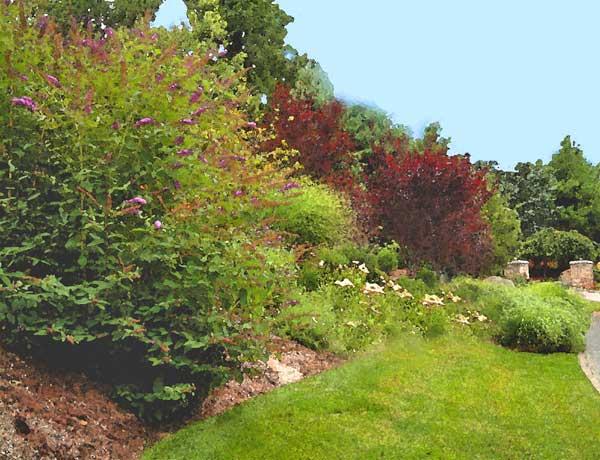 Slope Plantings